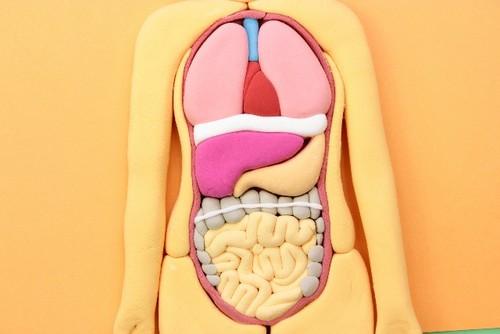 【みんなの家庭の医学】ねじれ腸が便秘の原因?マッサージとチェック方法について
